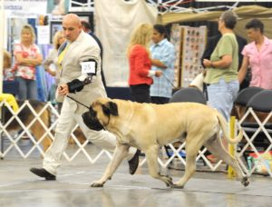 2021 River Valley Cluster Dog Show @ Owensboro Convention Center   Owensboro   Kentucky   United States